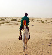 Tuareg on camel (click to enlarge)